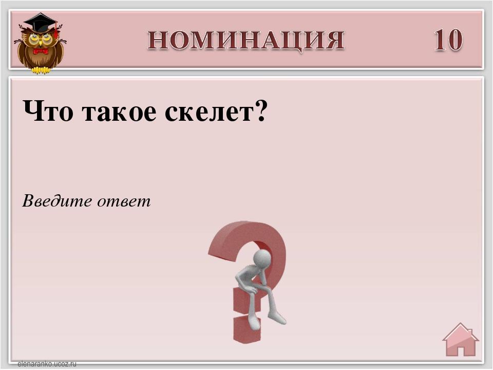 Введите ответ Что такое скелет?
