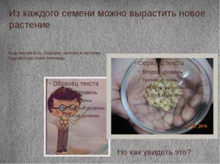 Из каждого семени можно вырастить новое растение Ведь внутри есть –корешок, п