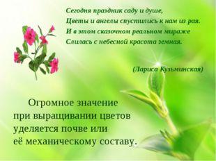 Сегодня праздник саду и душе, Цветы и ангелы спустились к нам из рая. И в это