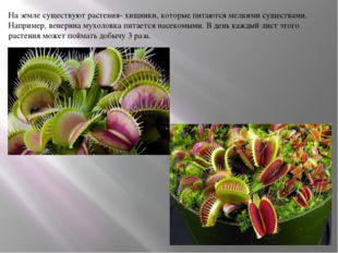 На земле существуют растения- хищники, которые питаются мелкими существами. Н