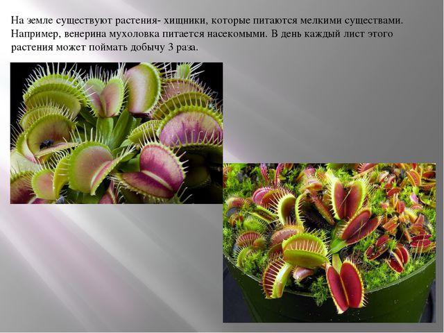 На земле существуют растения- хищники, которые питаются мелкими существами. Н...