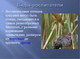 Воспитателями птенцов кукушки могут быть птицы, гнездящиеся в самых разнообра