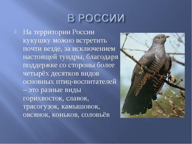 На территории России кукушку можно встретить почти везде, за исключением наст...