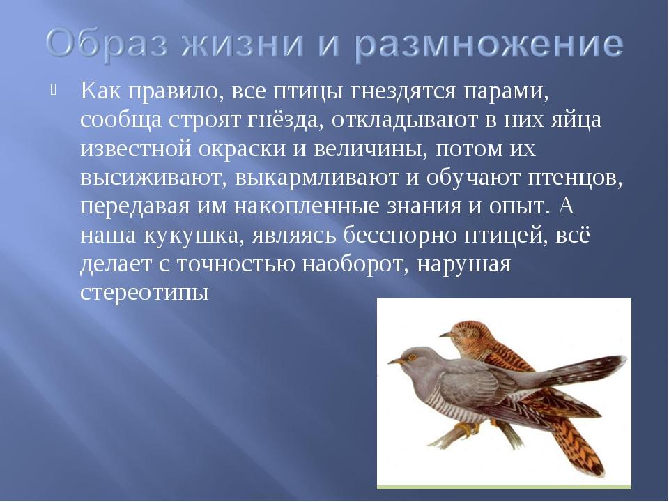 Как правило, все птицы гнездятся парами, сообща строят гнёзда, откладывают в...