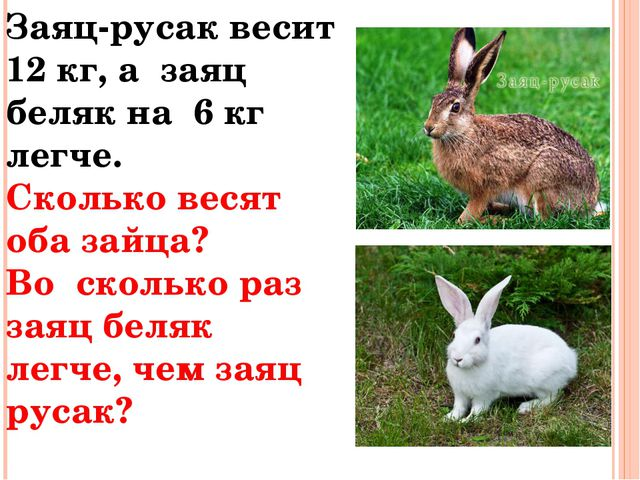 Заяц-русак весит 12 кг, а заяц беляк на 6 кг легче. Сколько весят оба зайца?...