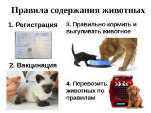 Правила содержания животных 1. Регистрация 2. Вакцинация 3. Правильно кормит