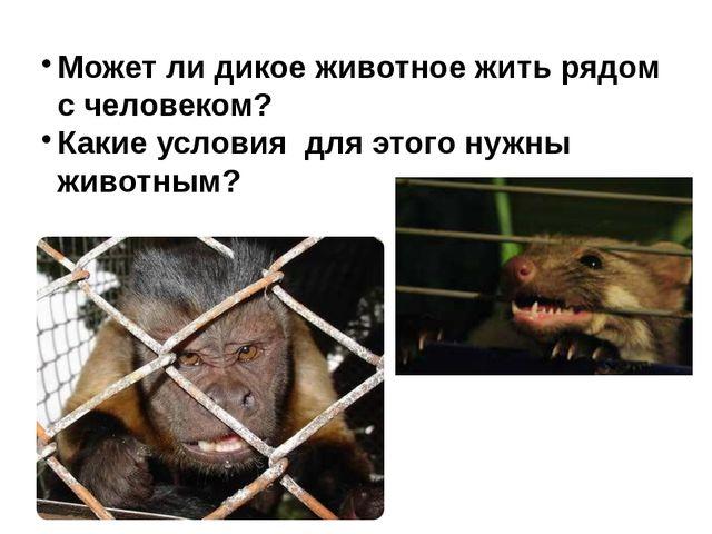 Может ли дикое животное жить рядом с человеком? Какие условия для этого нужны...