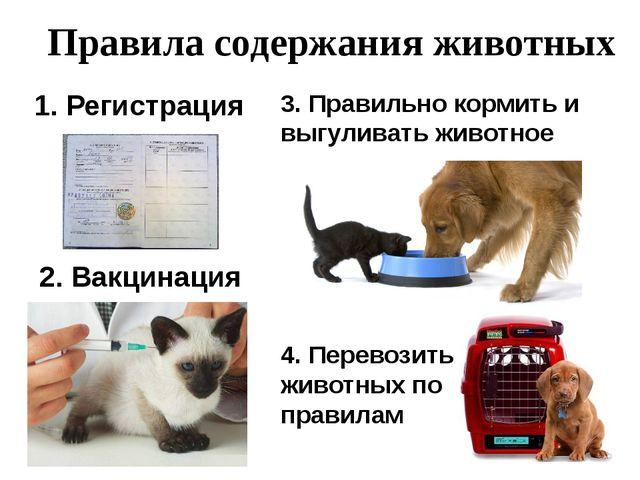 Правила содержания животных 1. Регистрация 2. Вакцинация 3. Правильно кормит...