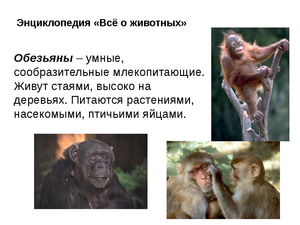 Энциклопедия «Всё о животных» Обезьяны – умные, сообразительные млекопитающие...