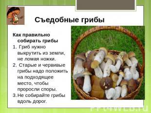 Съедобные грибы Как правильно собирать грибы Гриб нужно выкрутить из земли, не л