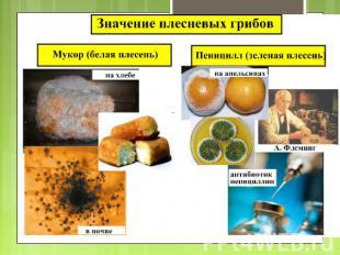http://ppt4web.ru/images/17/844/310/img11.jpg