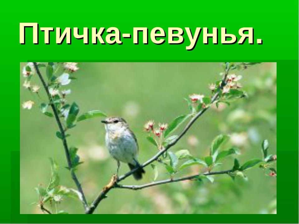 Птичка-певунья.