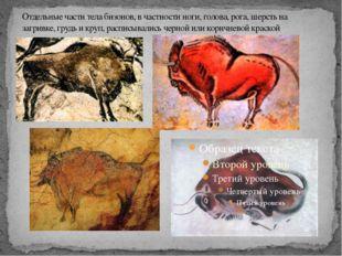 Отдельные части тела бизонов, в частности ноги, голова, рога, шерсть на загри