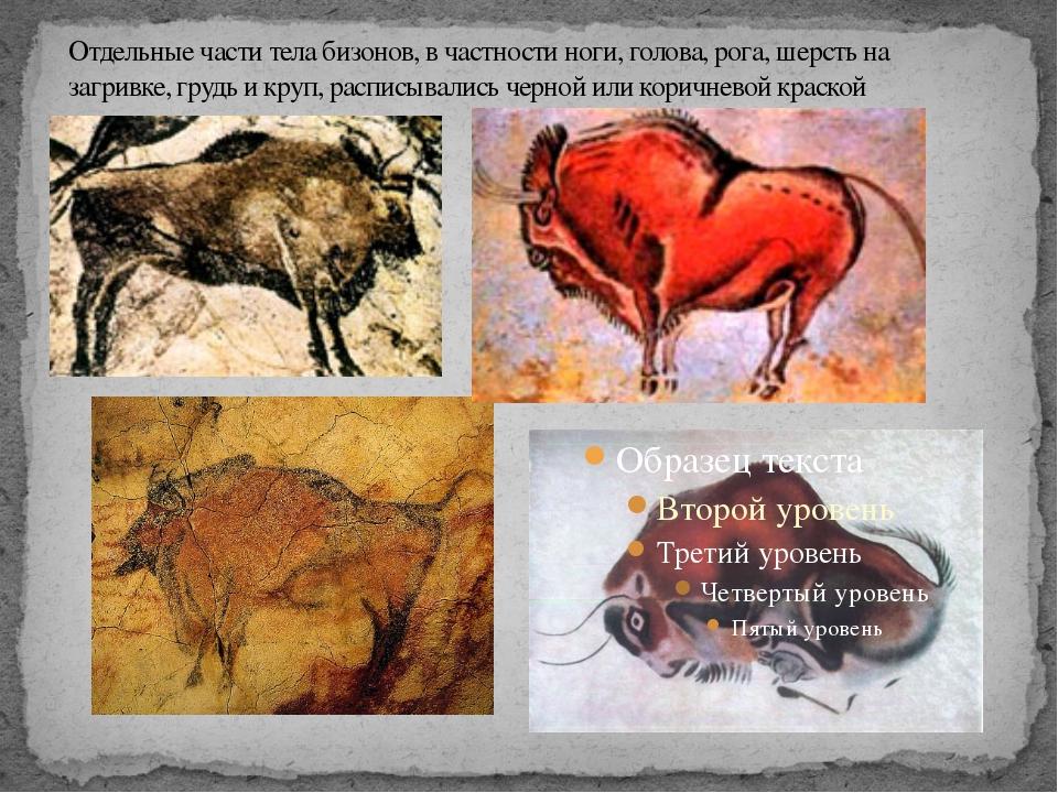 Отдельные части тела бизонов, в частности ноги, голова, рога, шерсть на загри...