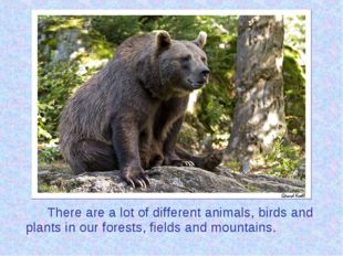 There are a lot of different animals, birds and plants in our forests, fiel
