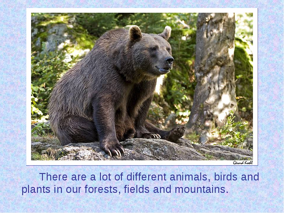 There are a lot of different animals, birds and plants in our forests, fiel...