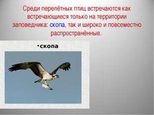Среди перелётных птиц встречаются как встречающиеся только на территории запо
