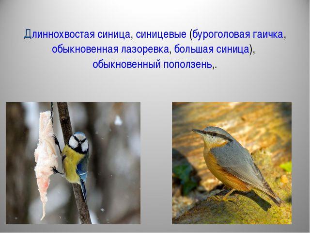 Длиннохвостая синица, синицевые (буроголовая гаичка, обыкновенная лазоревка,...
