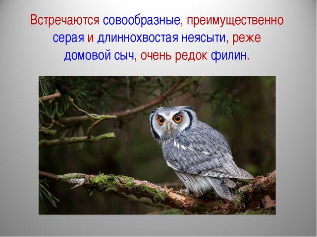 Встречаются совообразные, преимущественно серая и длиннохвостая неясыти, реже...