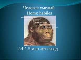 Человек умелый Homo habiles 2.4-1.5 млн лет назад Homo Habilis. Умели изготав