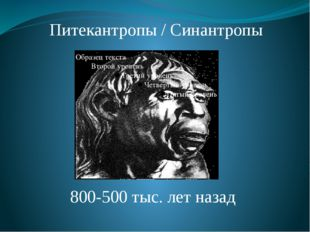 Питекантропы / Синантропы 800-500 тыс. лет назад Питекантропы и синантропы. О