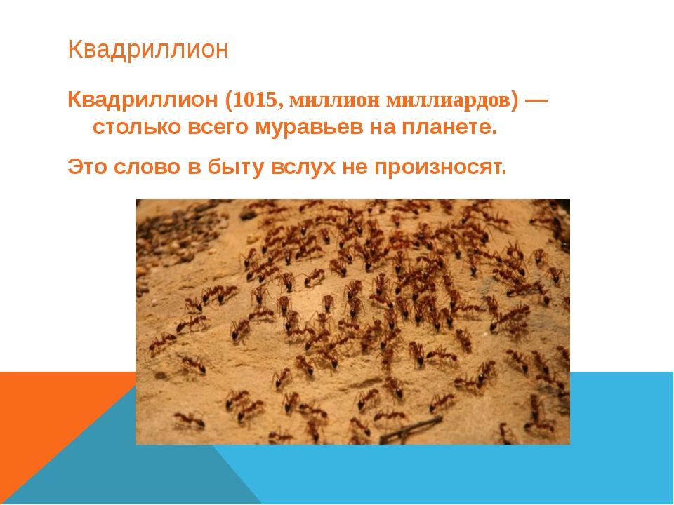 Квадриллион Квадриллион (1015, миллион миллиардов) — столько всего муравьев н...