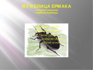 ЖУЖЕЛИЦА ЕРМАКА Отряд Жесткокрылые Семейство Жужелицы