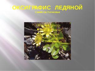 ОКСИГРАФИС ЛЕДЯНОЙ Семейство Лютиковые