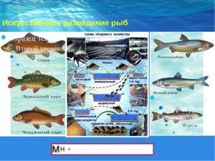 Искусственное разведение рыб
