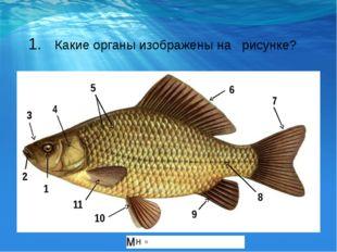 1. Какие органы изображены на рисунке? 1 2 3 4 5 6 8 9 10 11 7