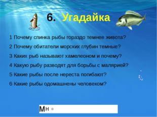 6. Угадайка 1 Почему спинка рыбы гораздо темнее живота? 2 Почему обитатели мо