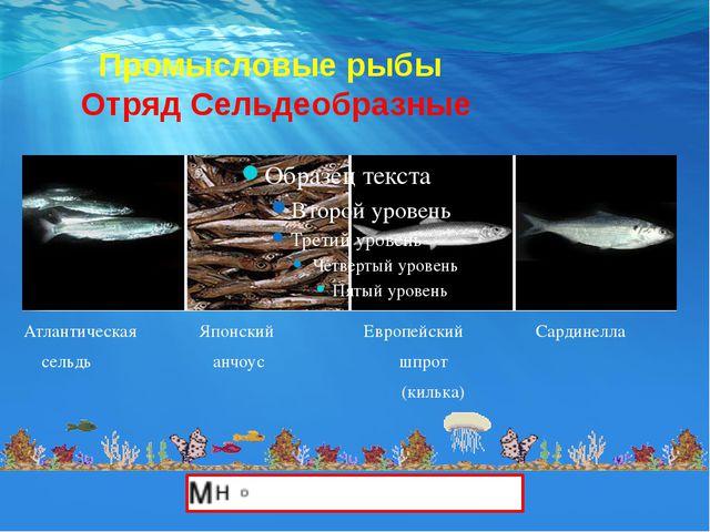 Промысловые рыбы Отряд Сельдеобразные Атлантическая Японский Европейский Сар...