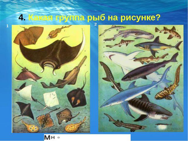 4. Какая группа рыб на рисунке? 1 2