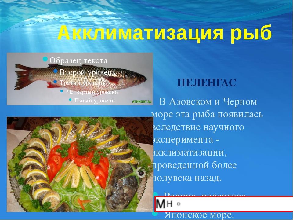 Акклиматизация рыб ПЕЛЕНГАС В Азовском и Черном море эта рыба появилась всле...