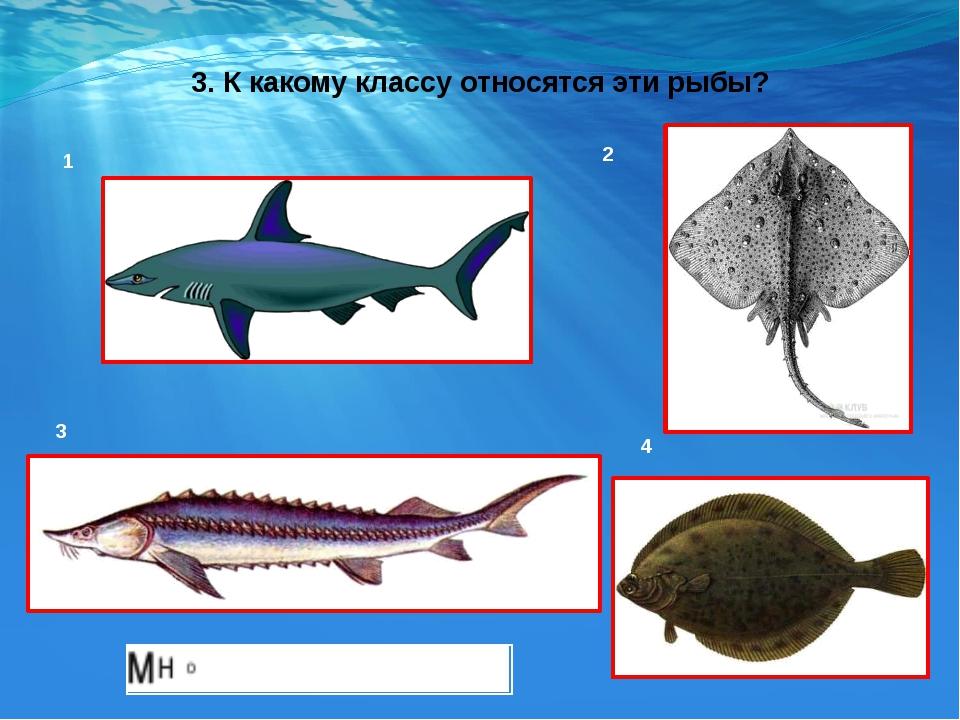 3. К какому классу относятся эти рыбы? 1 2 3 4