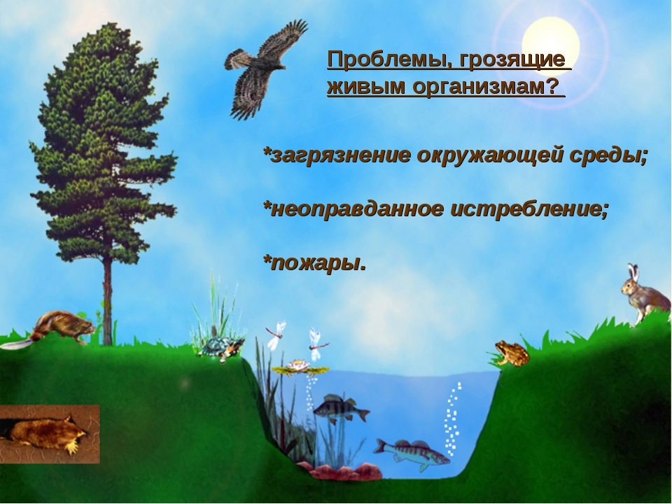 Проблемы, грозящие живым организмам? *загрязнение окружающей среды; *неоправд...