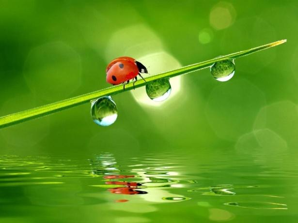 Orange-ladybug-two-spots3.jpg