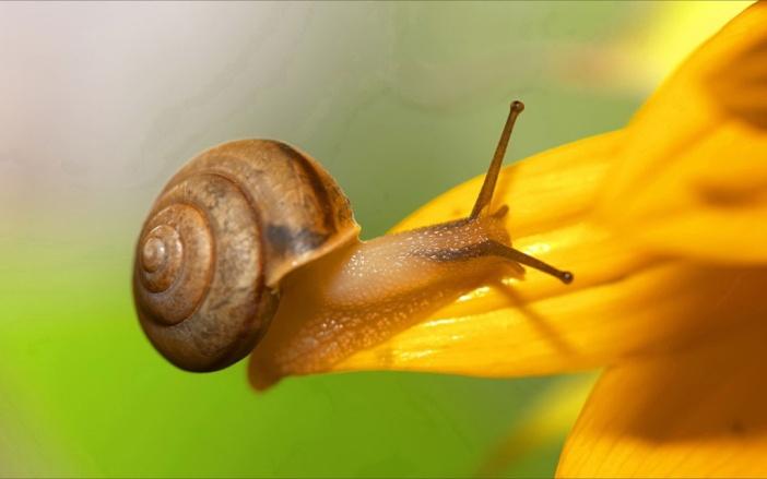 Snails-wallpapers-010-1024x640.jpg