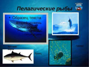 Пелагические рыбы Китовая акула Тунец Марлин Групер