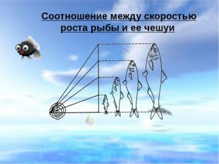 Соотношение между скоростью роста рыбы и ее чешуи