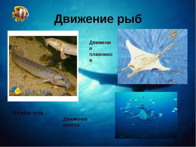 Движение рыб Изгибы тела Движения плавников Движения хвоста