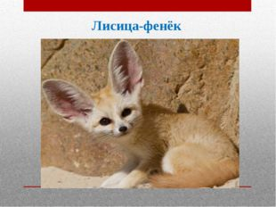 Лисица-фенёк