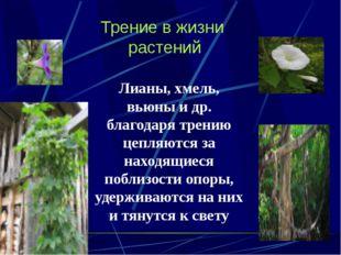Трение в жизни растений Лианы, хмель, вьюны и др. благодаря трению цепляются
