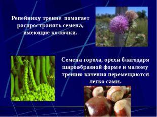 Репейнику трение помогает распространять семена, имеющие колючки. Семена горо
