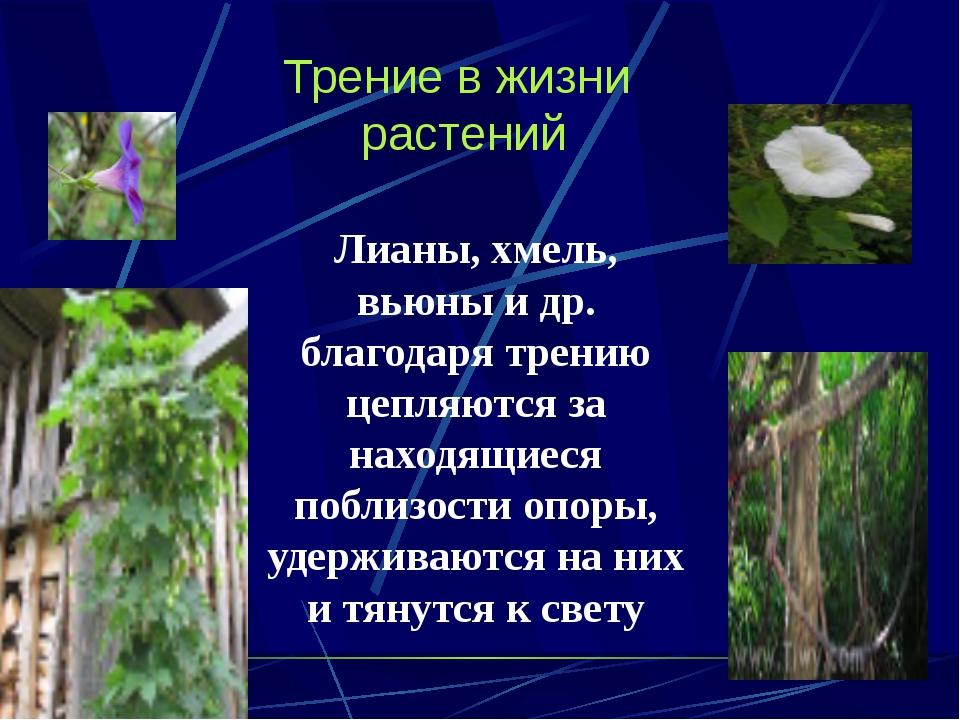 Трение в жизни растений Лианы, хмель, вьюны и др. благодаря трению цепляются...