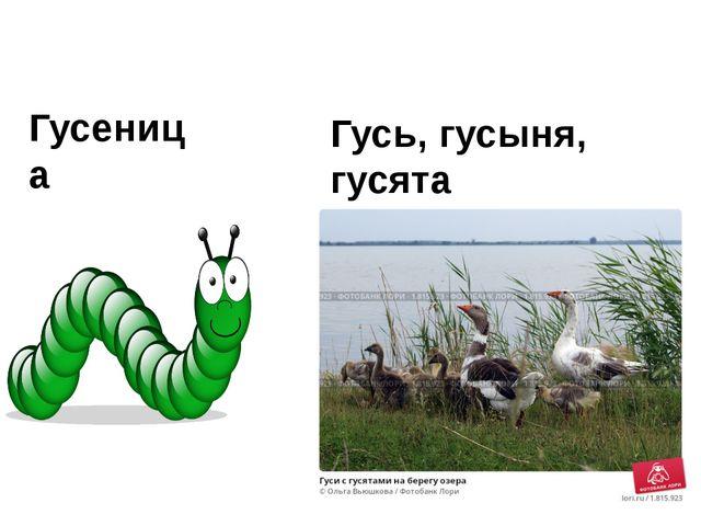 Гусеница Гусь, гусыня, гусята