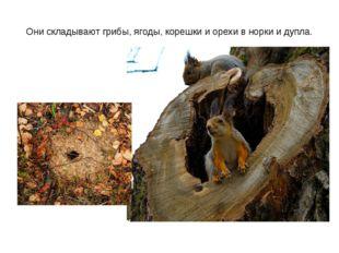 Они складывают грибы, ягоды, корешки и орехи в норки и дупла.