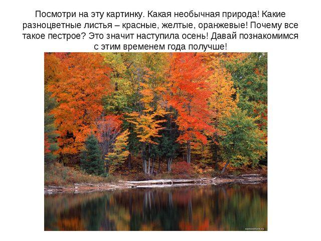 Посмотри на эту картинку. Какая необычная природа! Какие разноцветные листья...