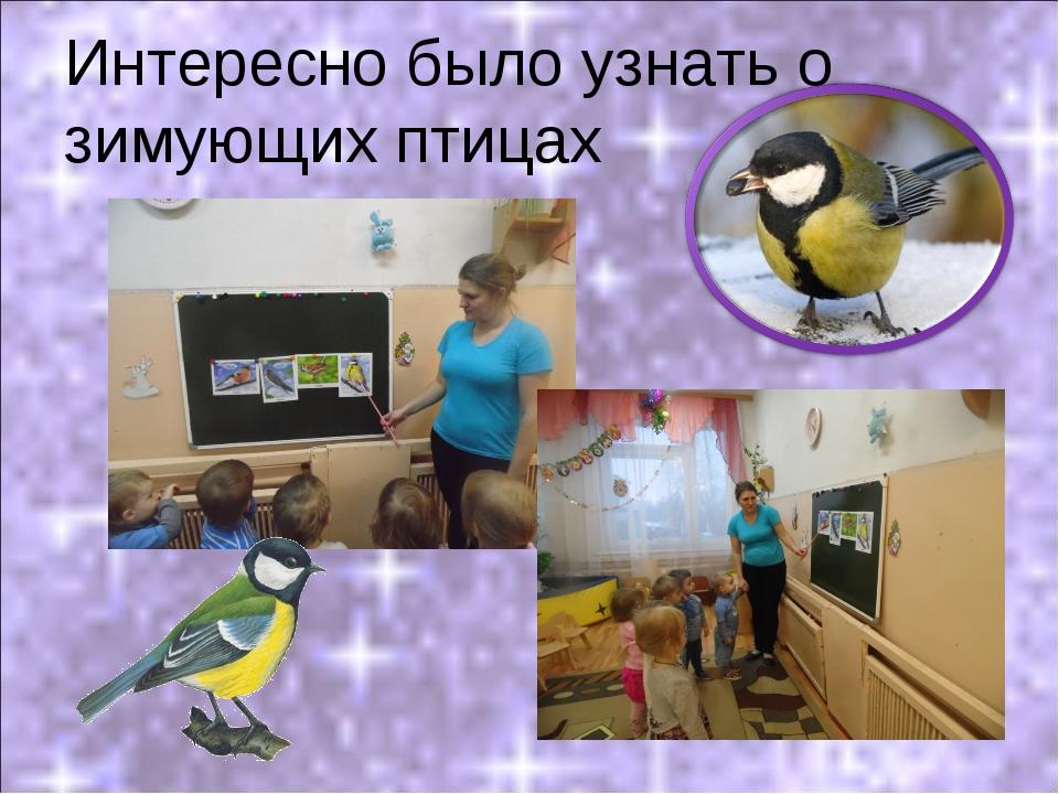 Интересно было узнать о зимующих птицах