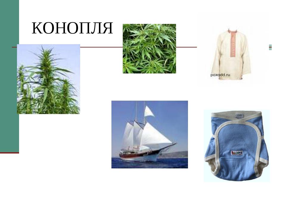 КОНОПЛЯ